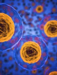 Tajczi odnawia komórki macierzyste