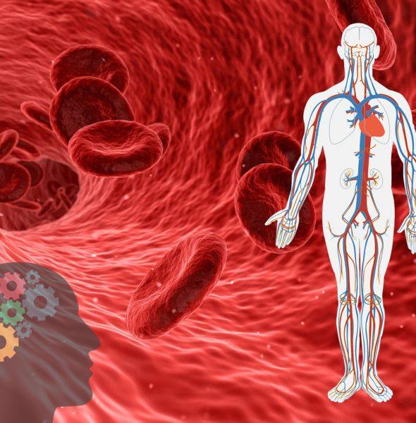 Sprawny Układ Krwionośny