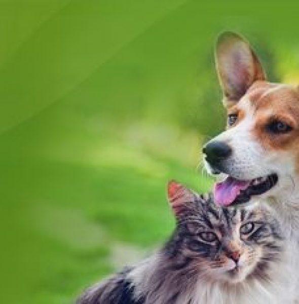 Kurs uzdrawiania Zwierząt THETA Healing® z Anitą Putkiewicz