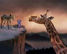 Szakal i żyrafa – czego nas mogą nauczyć ?