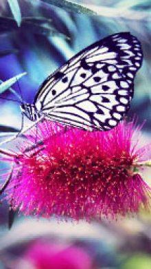 Masaż Dotyk Motyla